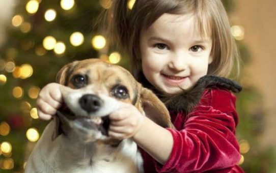 Tolerancyjny islam europejski wypowiada wojnę psom