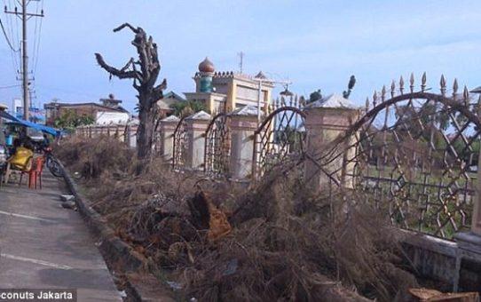 Indonezja: wycięto sosny, bo denerwowały muzułmanów przypominając im bożonarodzeniowe choinki